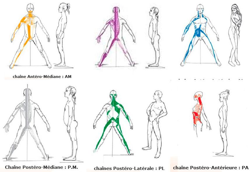 cadeiras musculares 5