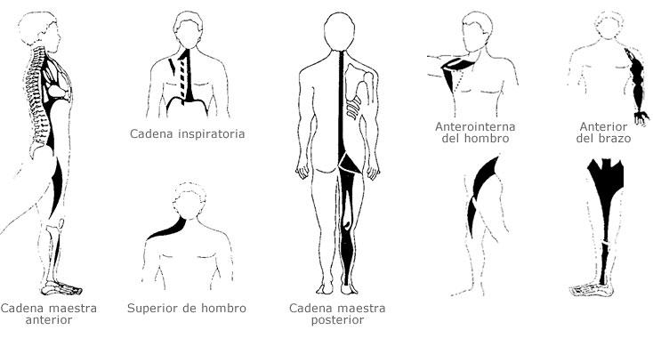 cadeias musculares 4