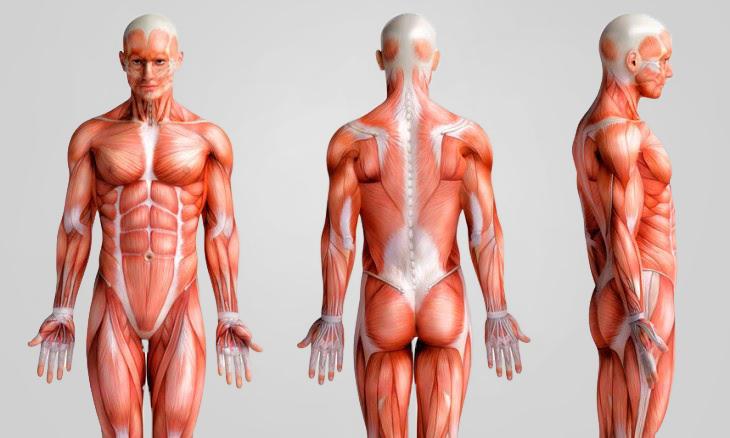 Como ativar cada tipo de fibra muscular em uma aula completa