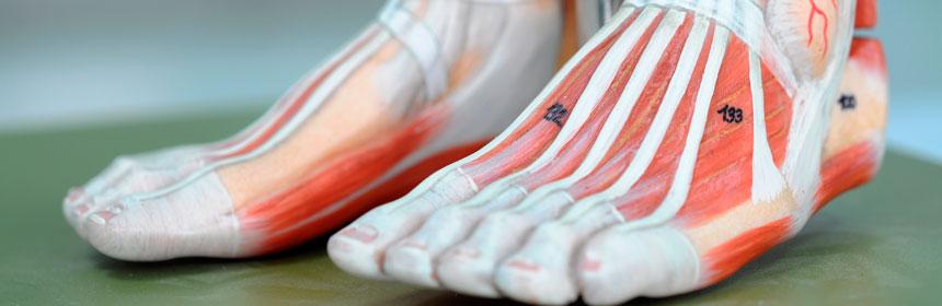 pés-3