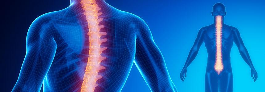 coluna-vertebral-5