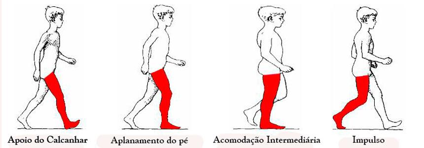 fases-da-marcha-(2)