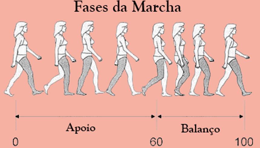 fases-da-marcha