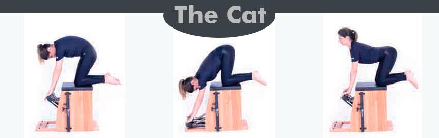 The-Cat---Incontinência-Urinária