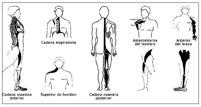alinhamento postural nova 12