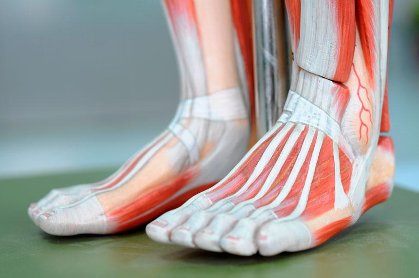 Estrutura do Pé: A influência dos calçados e o Pilates