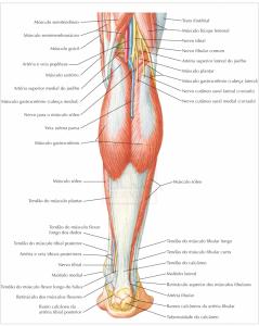 estrutura do pé (2)