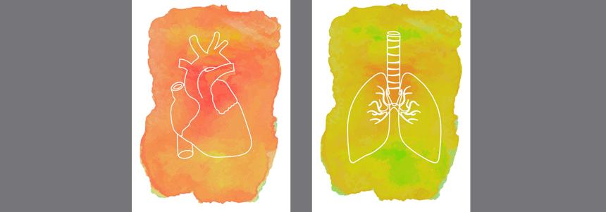Sistema-respiratório-3