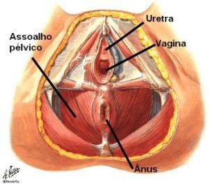 Prolapso Genital (1)