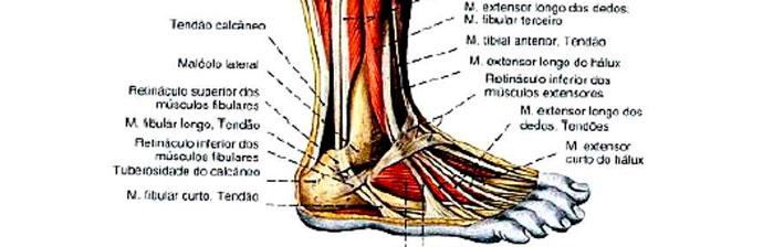 vasos sanguíneos quebrados dentro dos tornozelos