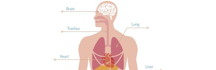Prática-de-Pilates---Sistema-Cardiorrespiratório-4