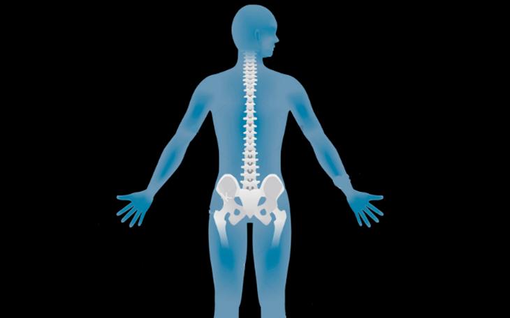 Estabilidade: Músculos Multífidos e Transverso do Abdômen – Análise Biomecânica