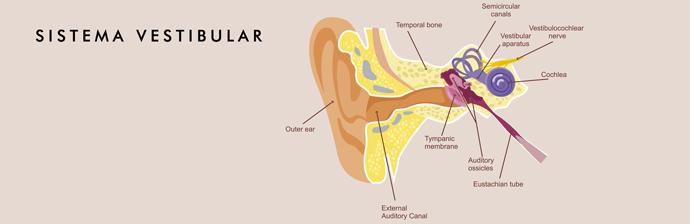 sistema-vestibular-4