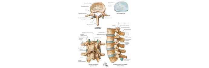 Dor-Lombar-Crônica---Agachamento-no-Pilates-3