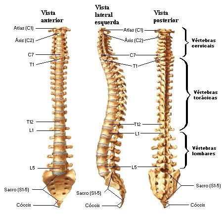 Desvios posturais 1