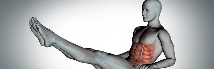 músculos-obliquos-1