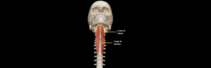 Dor-na-Cervical-2