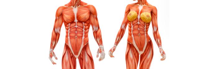 Estabilização Segmentar - Anatomia