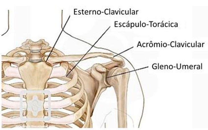 Reabilitação do Ombro – Como tratar com o Método Pilates