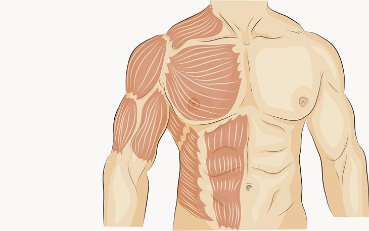 Trabalhar Músculos Eretores da Coluna facilita a Postura Correta