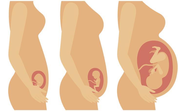 Pilates na Gestação: Como utilizar o Método em cada Trimestre?