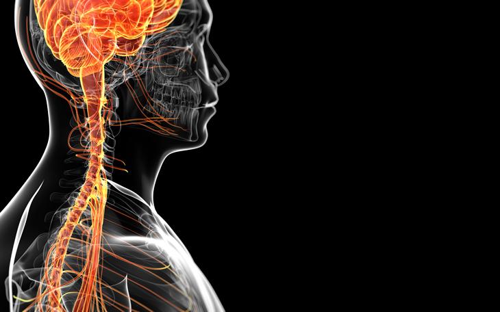 Como o conhecimento do Sistema Nervoso pode melhorar sua Aula?
