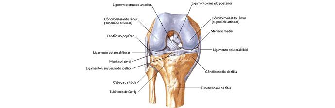 Anatomia Do Joelho Conheça Mais Essa Articulação Blog