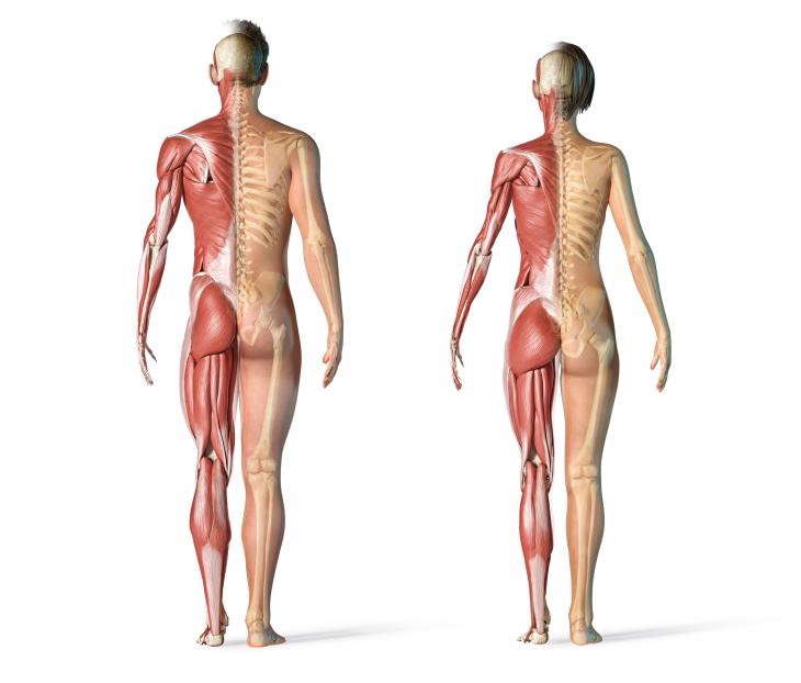 Fisiologia Neuromuscular Aplicado ao Método Pilates
