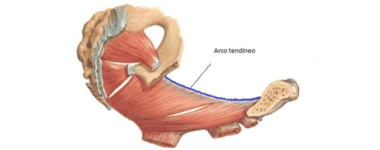 trabalhar-a-musculatura-do-assoalho-pelvico-map-na-gestacao