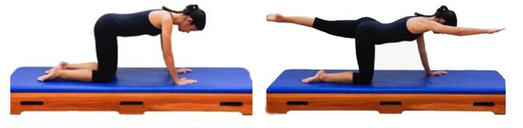 Perdigueiro-Exercícios de Pilates para a imunidade