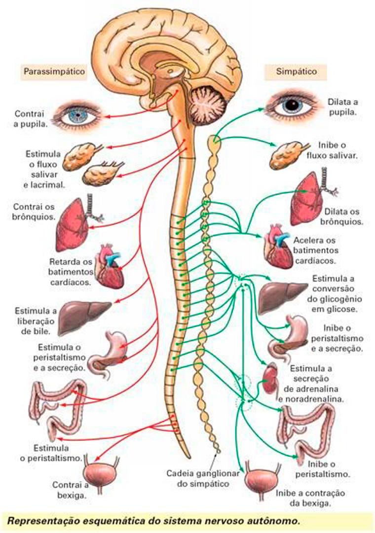 Método Hipopressivo 2